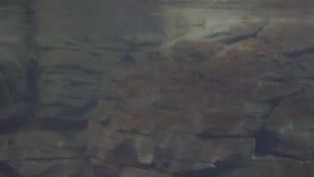 Podwodna rockowa formacja zdjęcie wideo