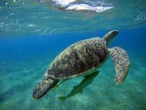 Podwodna sceneria z dennym żółwiem w błękitne wody zdjęcie stock