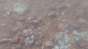 Podwodna strzelanina skalisty i błotnisty dno zbiory wideo