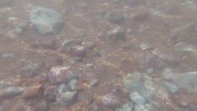 Podwodna strzelanina skalisty i błotnisty dno zdjęcie wideo