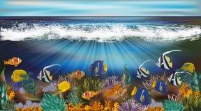 Podwodna tapeta z tropikalną ryba Obraz Stock
