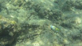 Podwodna tekstura i fauny w Ionian morzu, Zakynthos, Grecja zdjęcie wideo