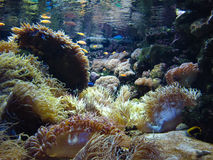 Podwodna tropikalna rafa Obraz Stock