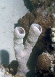 podwodne gąbek Fotografia Stock