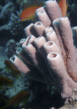 podwodne gąbki morskie Fotografia Royalty Free