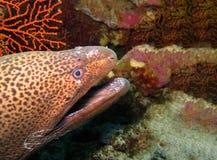 Podwodny świat w głębokiej wodzie w rafie koralowej i roślinach kwitnie flory w błękitnej światowej morskiej przyrodzie, podróży  obrazy stock