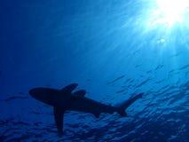 Podwodny świat w głębokiej wodzie w rafie koralowej i roślinach kwitnie flory w błękitnej światowej morskiej przyrodzie, rybie, k obrazy royalty free