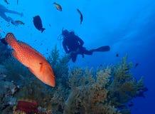 Podwodny świat w głębokiej wodzie w rafie koralowej i roślinach kwitnie flory w błękitnej światowej morskiej przyrodzie, rybie, k obrazy stock