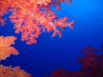 Podwodny świat w głębokiej wodzie w rafie koralowej i roślinach kwitnie flory w błękitnej światowej morskiej przyrodzie, rybie, k zdjęcie royalty free