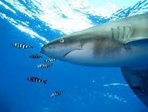 Podwodny świat w głębokiej wodzie w rafie koralowej i roślinach kwitnie flory w błękitnej światowej morskiej przyrodzie, rybie, k fotografia royalty free