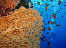 Podwodny świat w głębokiej wodzie w rafie koralowej i roślinach kwitnie flory w błękitnej światowej morskiej przyrodzie, rybie, k zdjęcia royalty free