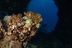 Podwodny łuk - Czerwony Morze Zdjęcia Royalty Free
