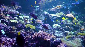 Podwodny świat - morze, ocean, ryba, koral zdjęcie wideo