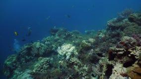 Podwodny świat rafa koralowa zbiory