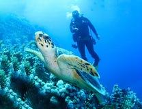 Podwodny świat w głębokiej wodzie w rafie koralowej i roślinach kwitnie flory w błękitnej światowej morskiej przyrodzie, rybie, k zdjęcia stock