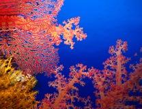 Podwodny świat w głębokiej wodzie w rafy koralowej i rośliny natury florze w błękitnej światowej morskiej przyrodzie, oceanu denn obrazy stock