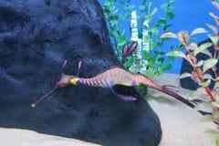 Podwodny światowy akwarium zdjęcie stock