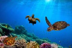 podwodny żółwia morza czerwonego Zdjęcie Royalty Free