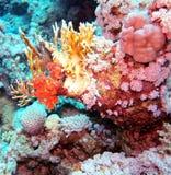 Podwodny życie: korale w tropikalnym nawadniają fotografia stock