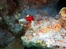 Podwodny życie: korale w tropikalnym nawadniają zdjęcie royalty free