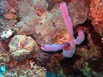 Podwodny życie: korale w tropikalnym nawadniają obrazy royalty free