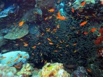 Podwodny życie: korale w tropikalnym nawadniają zdjęcie stock