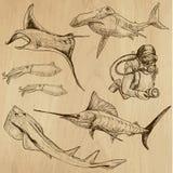 Podwodny, Denny życie, (wektor ustawia żadny 3) - ręka rysująca Zdjęcie Stock