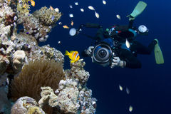 Podwodny fotograf Fotografia Stock