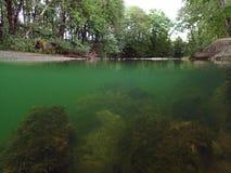 Podwodny i nawierzchniowy wodny absorbowanie od strumienia fotografia stock