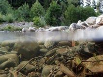 Podwodny i nawierzchniowy wodny absorbowanie od strumienia zdjęcia royalty free