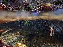 Podwodny i wodny absorbowanie strumieniem zdjęcia stock