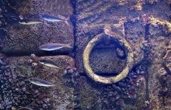 Podwodny kotwicowy tło zalewał starych doku kamienia purpur ściany ryba małże dołączających Obrazy Royalty Free