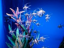 Podwodny królestwo, wyrównujący za szkłem zdjęcia stock