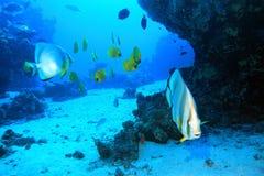 Podwodny krajobraz Fotografia Stock