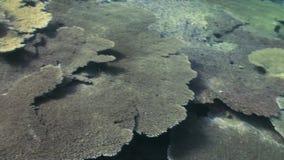 Podwodny krajobraz rafa koralowa Maldives zdjęcie wideo