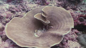 Podwodny krajobraz rafa koralowa Maldives zbiory