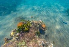 Podwodny krajobraz z Clownfish i m?od? raf? koralow? Tropikalnego seashore podwodna fotografia zdjęcie stock