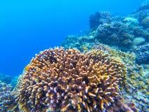Podwodny krajobraz z rafą koralowa Koralowa podmorska fotografia Seashore tekstura Obraz Stock