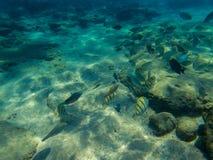Podwodny krajobraz z tropikalną rybą w błękitnej wodzie morskiej Koral ryba szkoła Tropikalny nadmorski z koralem i zwierzęciem fotografia royalty free