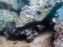 Podwodny krajobraz z wieśniaków kamieniami i koral łowimy Mała ryba w skałach Tropikalny seashore snorkeling lub nurkuje zdjęcie stock