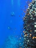 podwodny krajobrazu Zdjęcia Royalty Free
