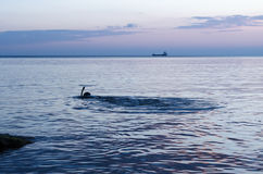 Podwodny myśliwy na plażowym narządzaniu nurkować Łowić w Czarnym morzu fotografia royalty free