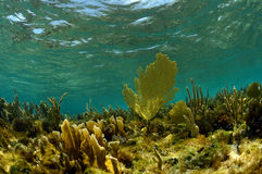 Podwodny nadwodny krajobraz z dennymi fan fotografia stock