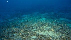 Podwodny piasek z świstkami na płytkim dnie morskim obraz royalty free