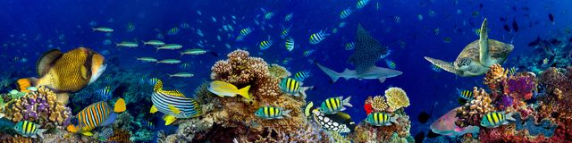Podwodny rafa koralowa krajobraz obraz royalty free
