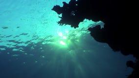 Podwodny relaksuje wideo o morskiej naturze w czysty przejrzystym Czerwony morze zbiory wideo