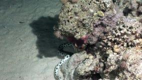 Podwodny relaksuje wideo o morskiej naturze w czysty przejrzystym Czerwony morze zbiory