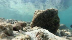 Podwodny rybi życia Asia Thailand zwierzę rybi, nadwodny, błękitny, ocean, rafa, morze, tropikalny, woda zbiory