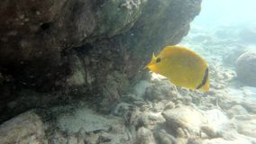 Podwodny rybi życia Asia Thailand zwierzę rybi, nadwodny, błękitny, ocean, rafa, morze, tropikalny, woda zbiory wideo
