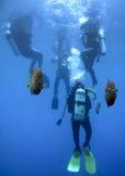 Podwodny Sentinals - akwalung klasa Fotografia Stock